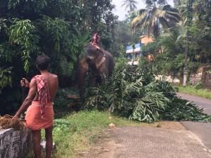 Kerala 12