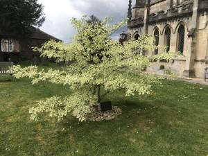 Wedding cake tree May 2020